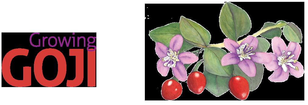 The Gardener Magazine Feature Article